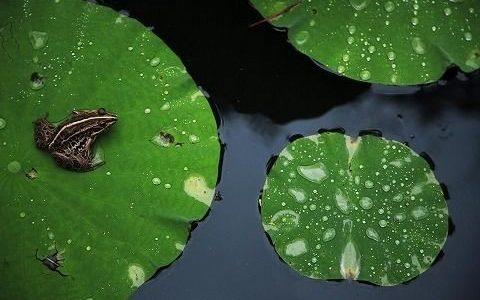 最近のJ-POPは「古池や 蛙飛び込む 水の音」を見習って欲しい